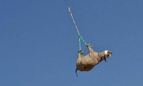 Rinocerontes são avistados voando de cabeça pra baixo em Namíbia