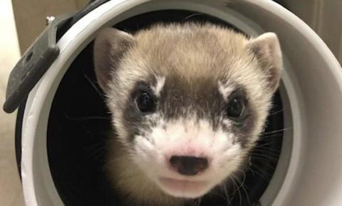 Animal que morreu há 33 anos voltou à vida graças à ciência