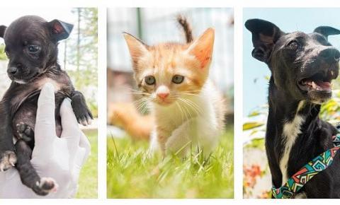 Animais resgatados poderão ser adotados no domingo, na Rua Fechada.